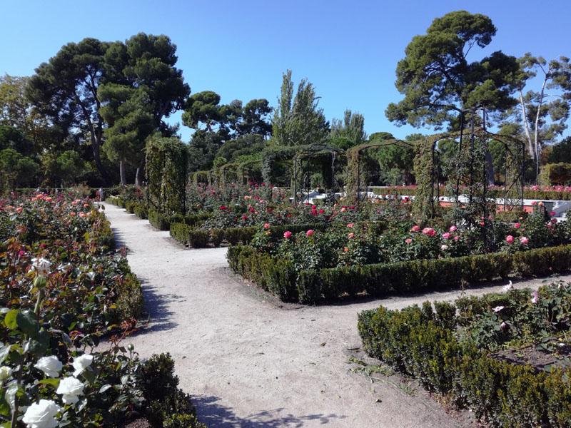 La rosaleda nel Parque de el Retiro - Madrid