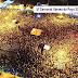 Confira as fotos do último dia do maior Carnaval da história de Várzea do Poço