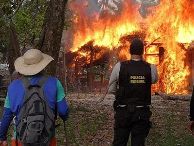 Operação da Policia Federal destrói 360 mil pés de maconha no MA e PA