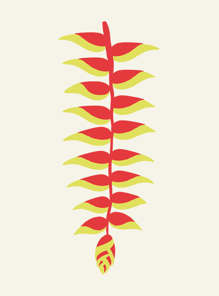 heliconia illustration