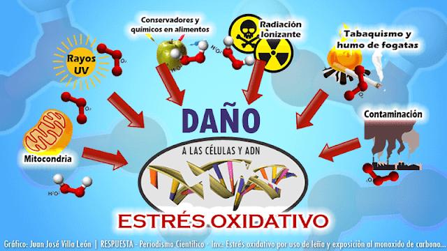 Estrés oxidativo por uso de leña y exposición al monoxido de carbono – repercusión cardio respiratoria en mujeres nativas y residentes de altura