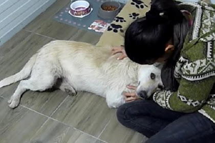 Homeless Dog Suffering From Cancer Only Wants To Be Hugged