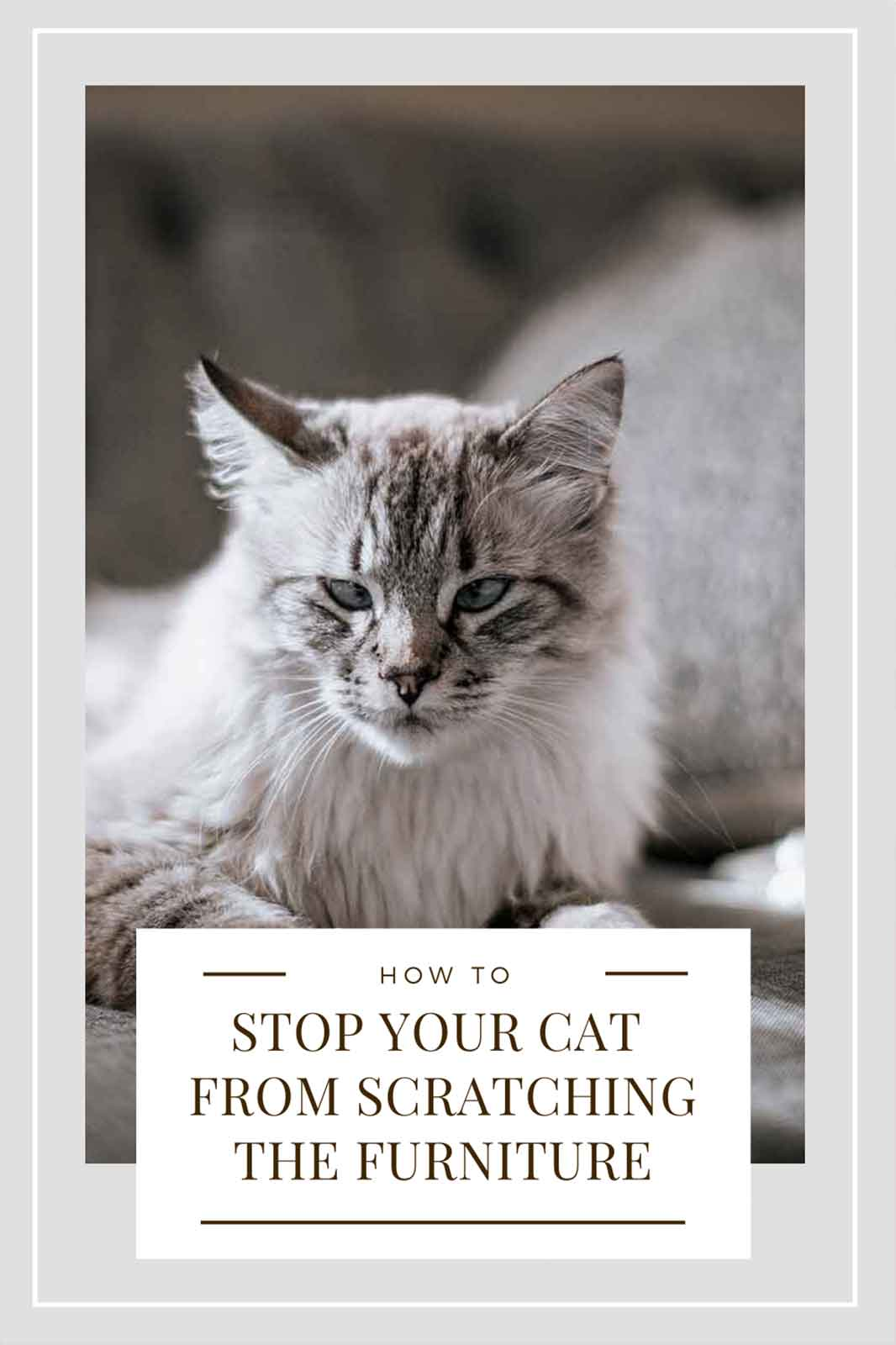 How to Stop Your Cat from Scratching the Furniture ...