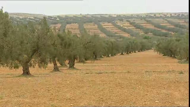 اشجار و حقول الزيتون صفاقس
