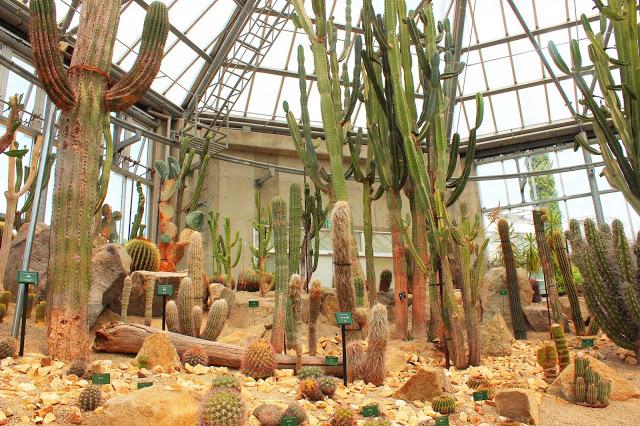 山口県、宇部市のときわ公園の植物園がリニューアルしたよ【Y】 プラントハンター西畠清順、世界を旅する植物館  南アメリカ、北ア中メリカ  砂漠のサボテン