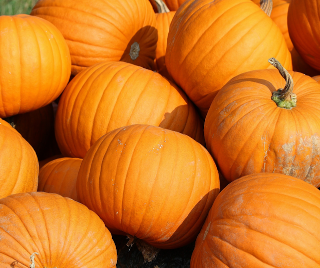 Fun Things To Do In Delaware County This Weekend For Families And Kids October 8th, 9th, and 10th