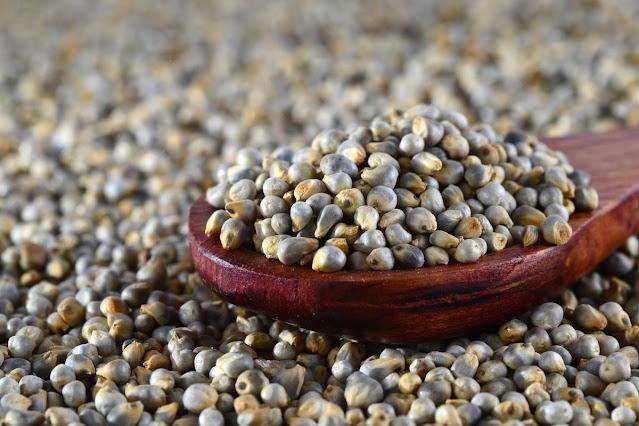 Bajra: benefici, usi e calorie del miglio perlato, il cereale senza glutine che dovresti rivalutare