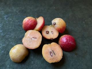 Sorbus domestica fruit