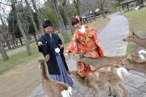 桜の奈良で和装前写しロケーション