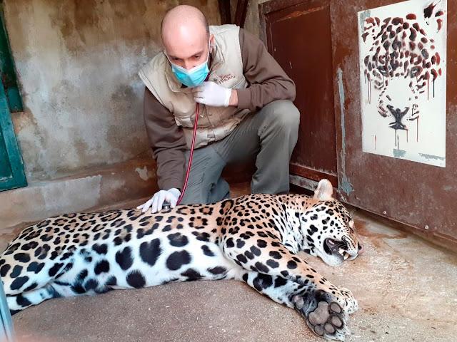 Revisión Jaguar