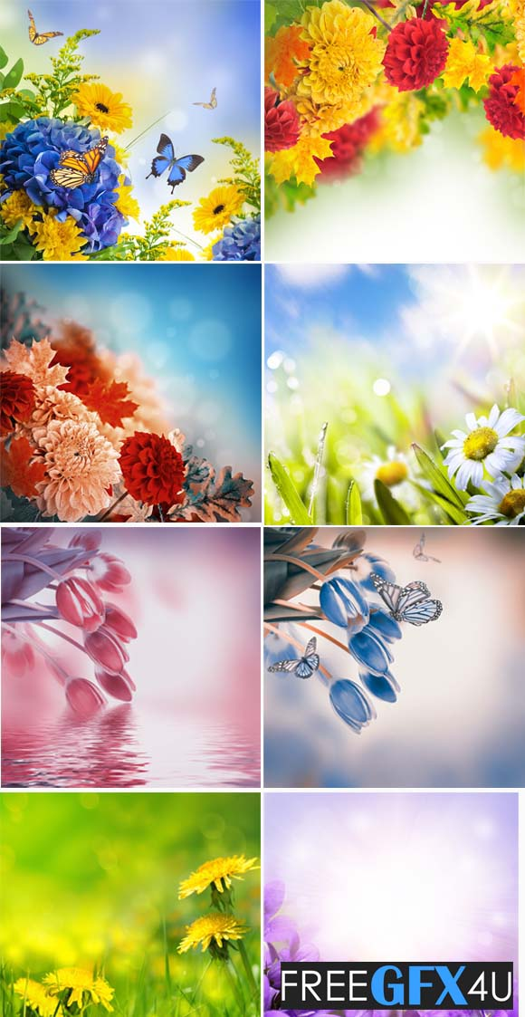 Flowers Backgrounds HD Free Download