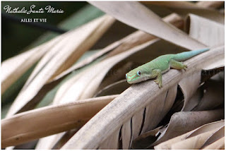 https://ailesetvie.blogspot.com/search?q=Phelsuma+dubia