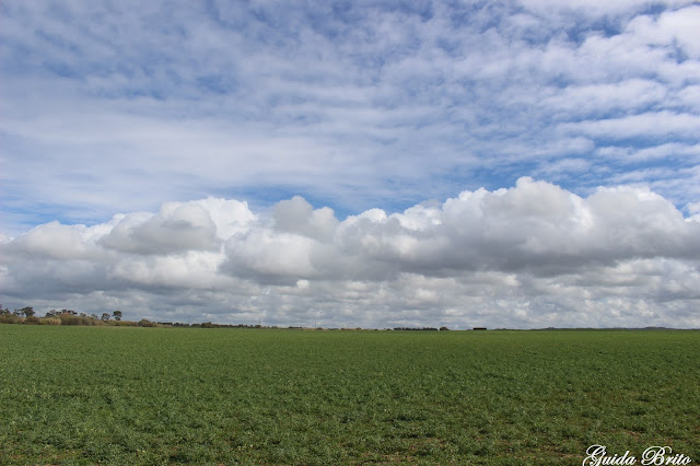 Campo e céu