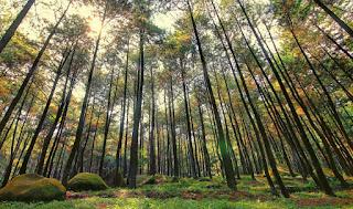 http://www.teluklove.com/2017/05/destinasti-objek-wisata-hutan-pinus.html