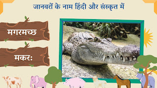 Crocodile name in sanskrit and hindi with images