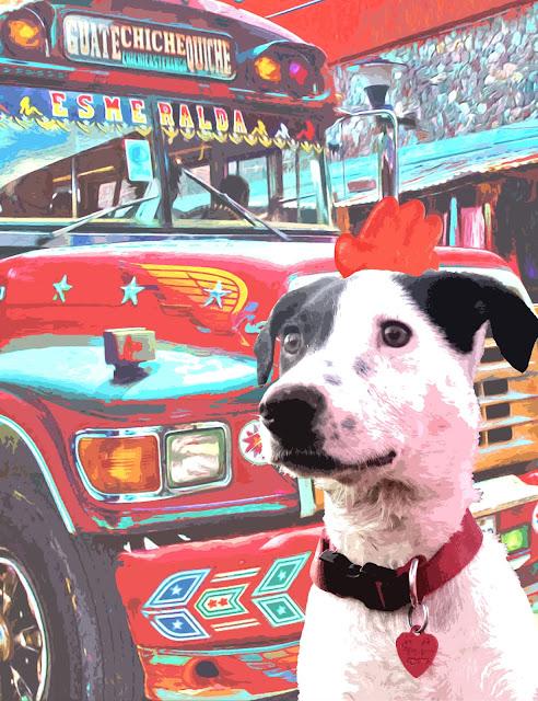 Chicken-Bus-Dog (by Carin Steen)