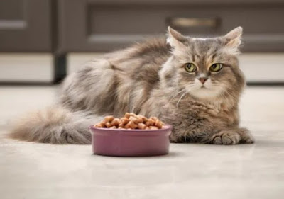 Tips Kucing Gemuk