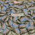 Tempat Cetak Pin Murah di Wamena