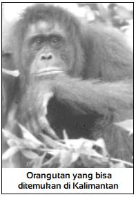 Region fauna Indonesia barat