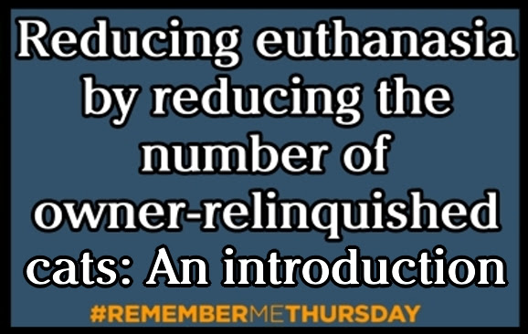 Reducing euthanasia by reducing the number of owner-relinquished cats: An introduction to keeping cats in their homes