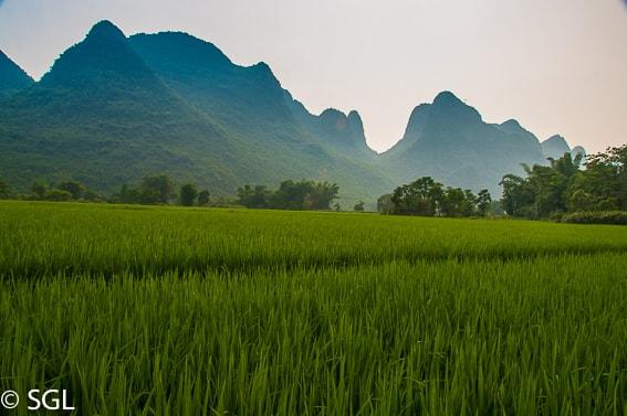 Arrozales de Yangshou. Viajando por China