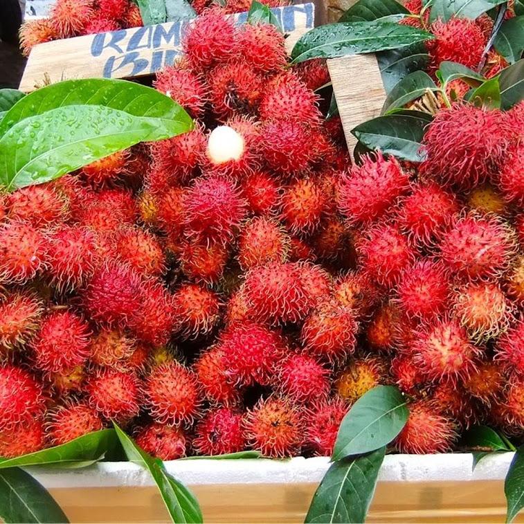Bibit Tanaman Buah Rambutan Binjai Unggul Varietas dijamin Asli dan Bergaransi Aceh