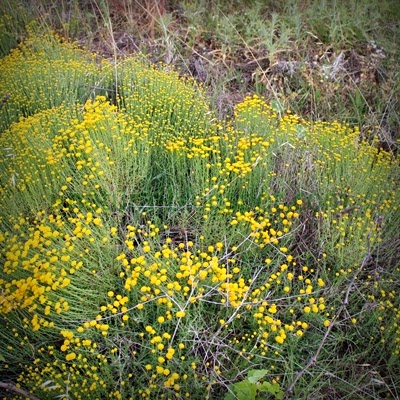 Control de plagas en sanidad ambiental ciertas plantas son el mejor repelente contra los - Plantas contra los mosquitos ...