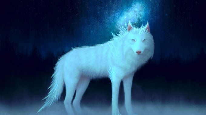 Lobo, Branco Arte, Animal, Fantasia
