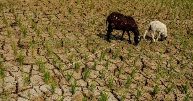 Sejumlah Wilayah Indonesia Berpotensi Kekeringan