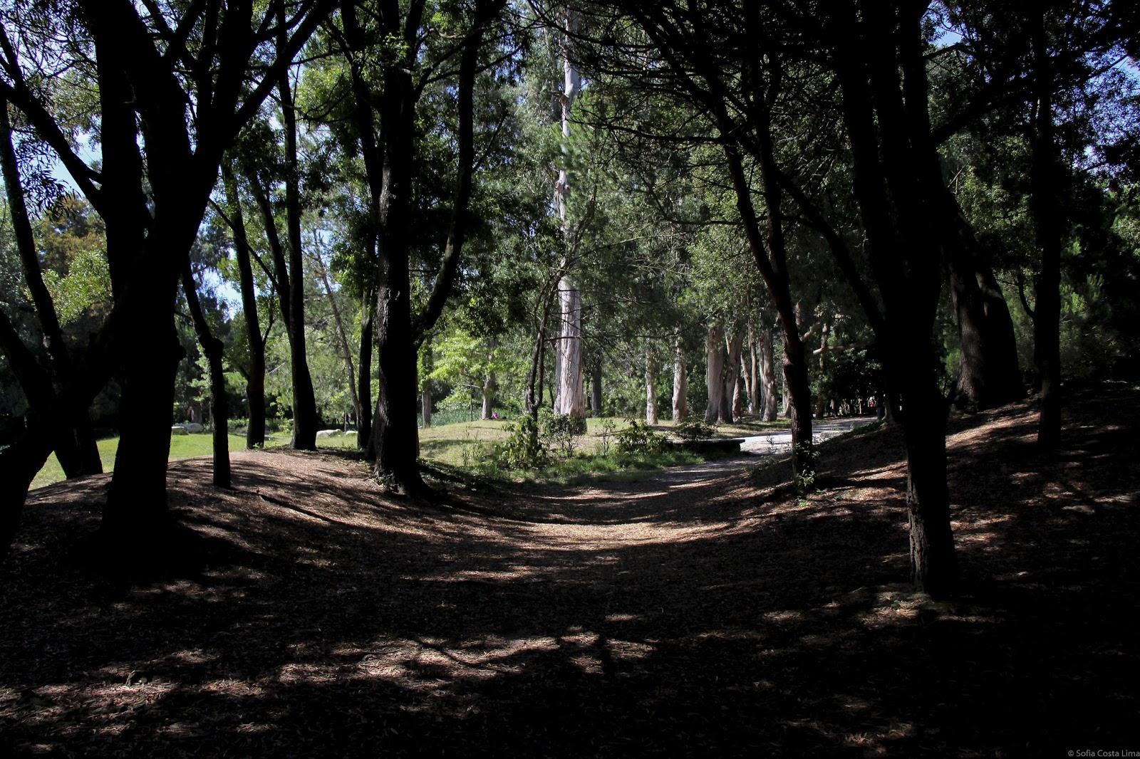 Parque da Cidade - Porto