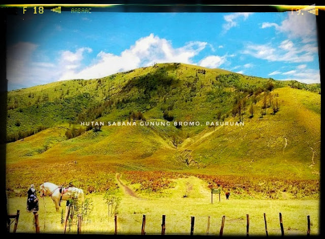 Hutan Sabana Gunung Bromo Tengger Semeru