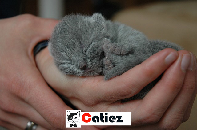 newborn kittens - all you want to know about newborn kittens