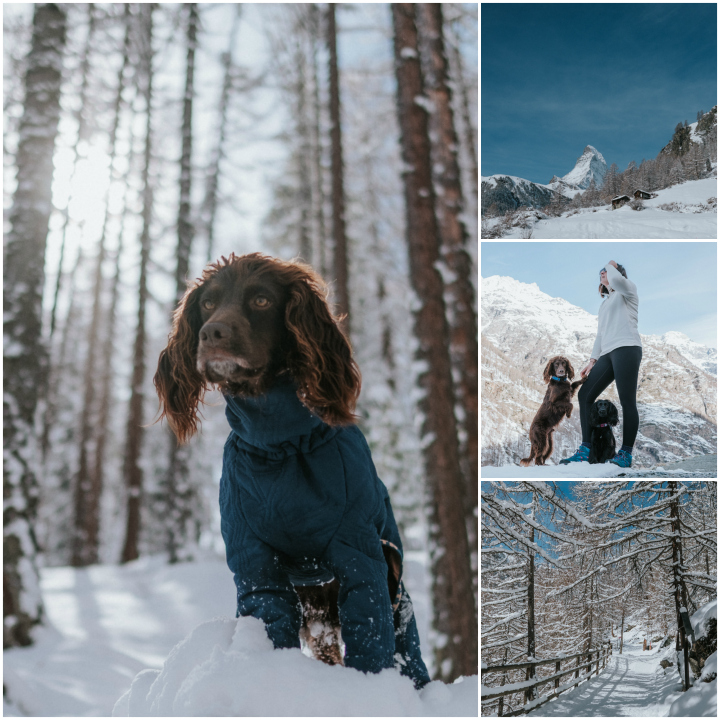 Zermatt with dogs