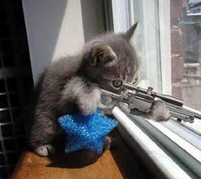 Funny Kitten Pics