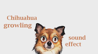 how chihuahua sounds