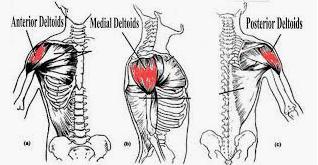Cara Membentuk dan Melebarkan Otot Bahu yang Benar