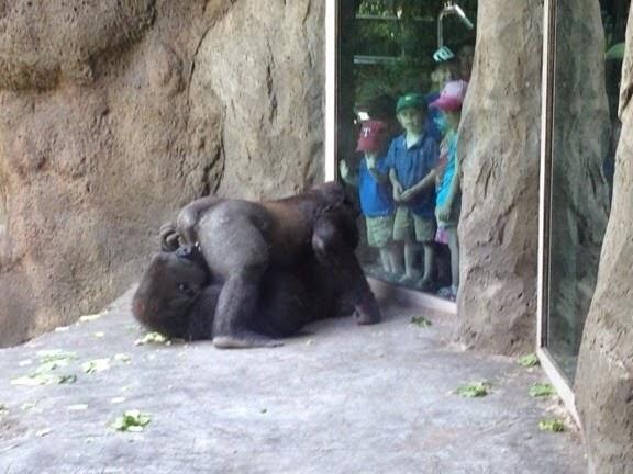 Di+Zoo+Akis+Yang+Terlampau.jpg