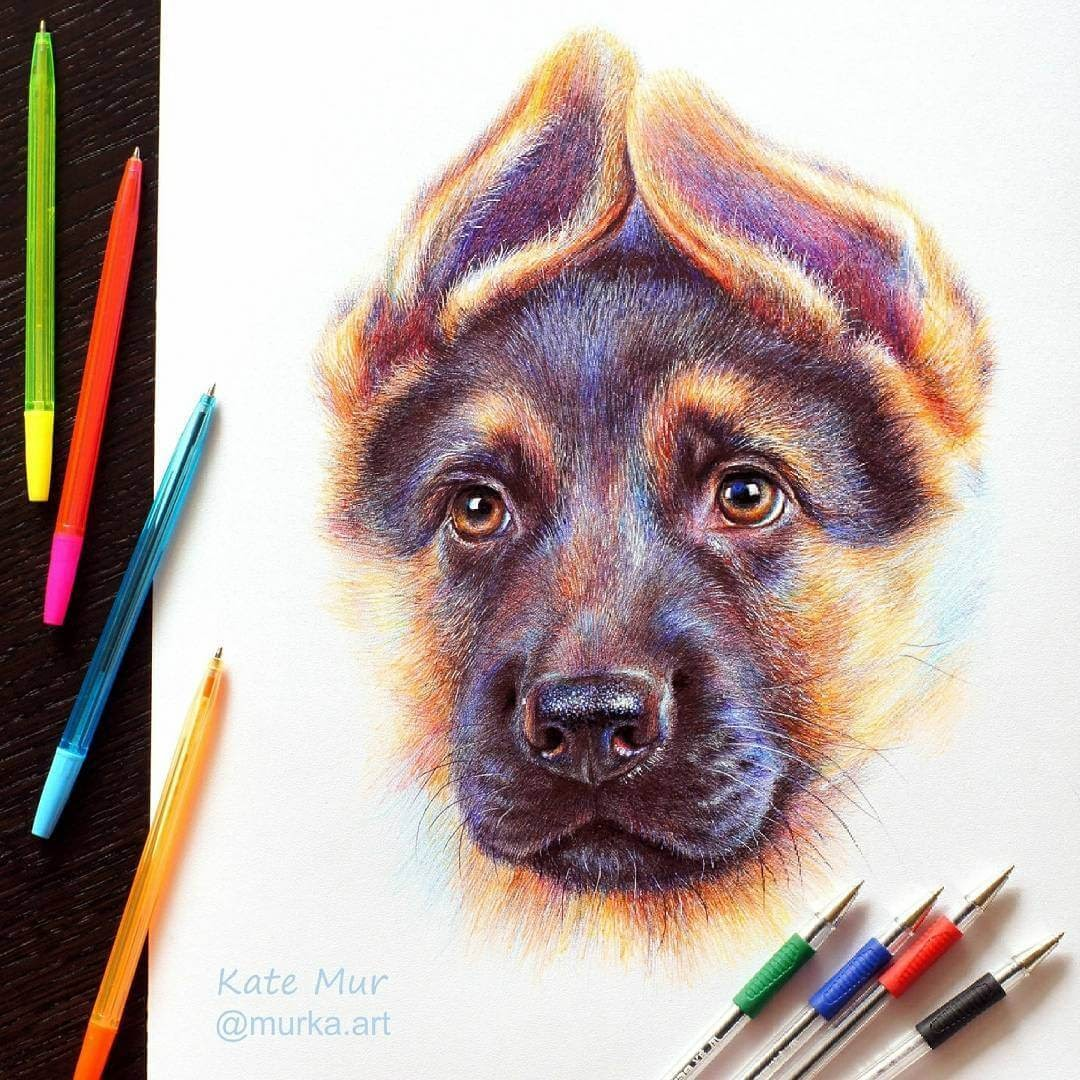 07-German-Shepherd-Kate-Mur-Animal-Art-with-Pencil-Ballpoint-Pen-and-Paint-www-designstack-co