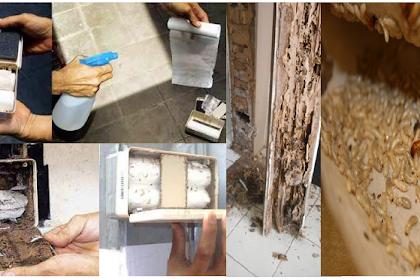 Inilah Cara Tepat Mencegah dan Usir Rayap yang Merusak Kusen Rumah dengan Mudah dan Sederhana