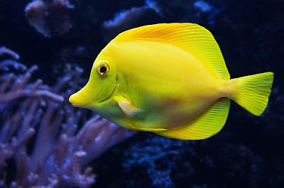 الفرق بين أسماك المياه العذبة وأسماك المياه المالحة