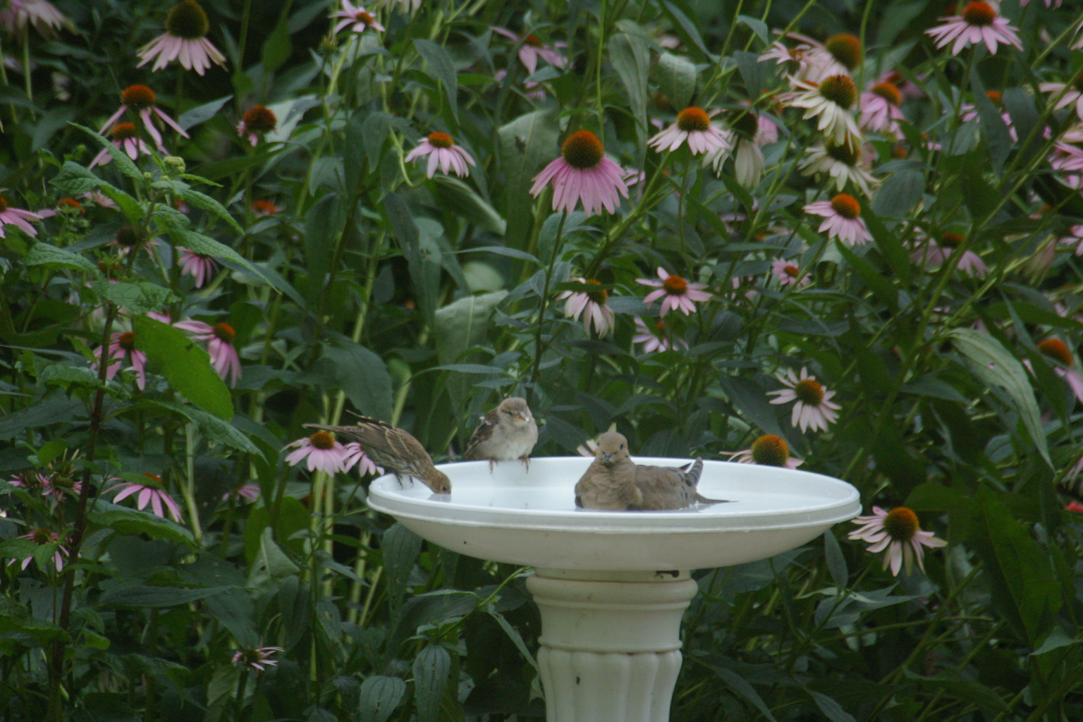 Slow Feeder Cat Bowl Wet Food Diy