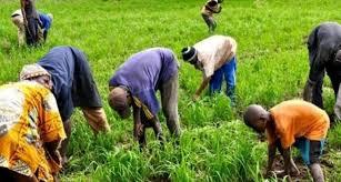 Sénégal - Mise en œuvre du projet Agri-jeune 2020-2025 :  Projets, plan, développement, économie, agriculture, jeune, énergie, PSE, LEUKSENEGAL, Dakar, Sénégal, Afrique