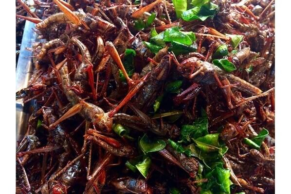 Belalang Goreng Kuliner Wajib Yang Harus Dicoba Saat Mudik