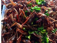 Belalang Goreng, Kuliner Wajib yang Harus Dicoba Saat Mudik ke Gunung Kidul