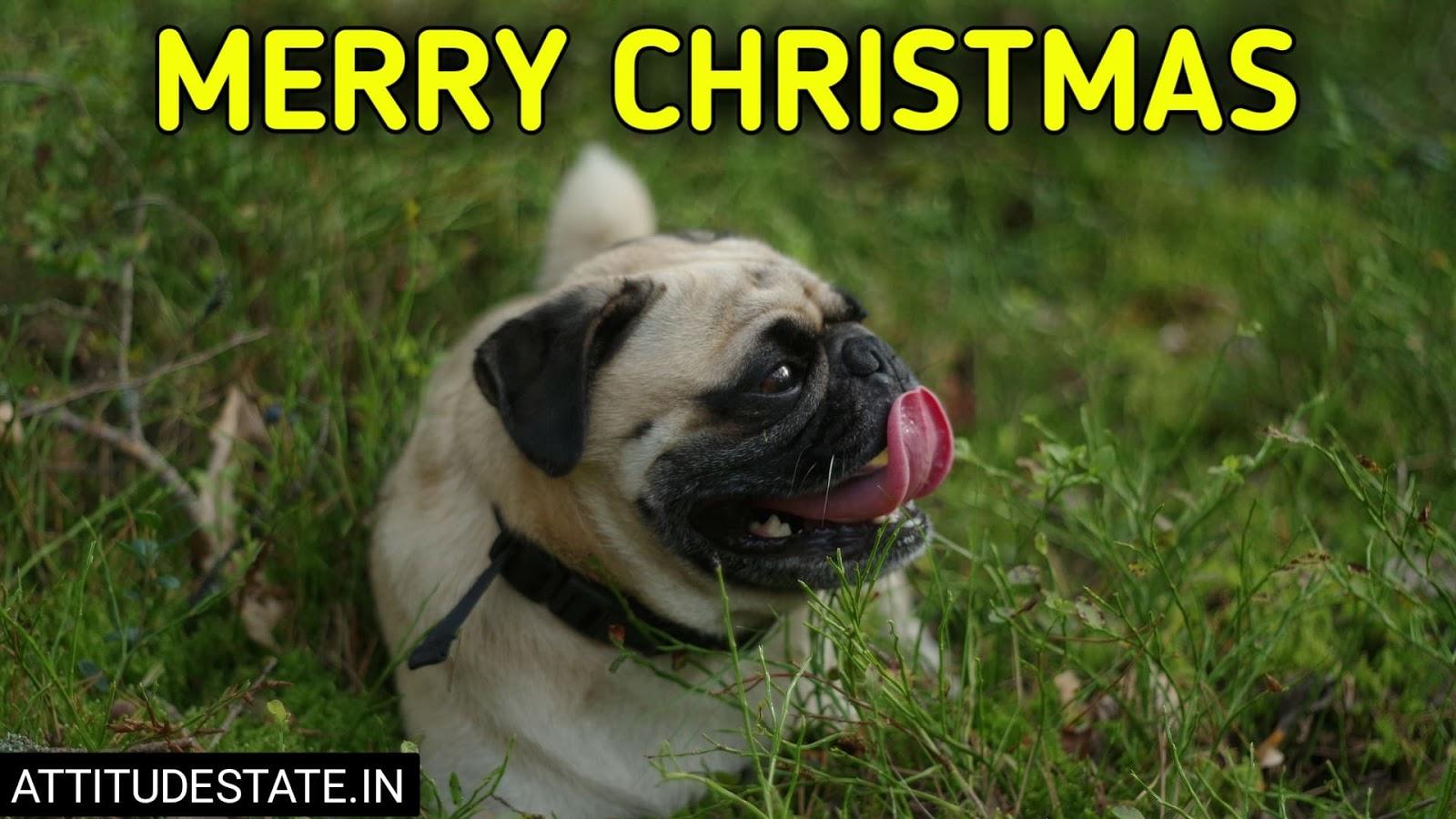 funny merry christmas cartoons