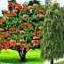 वास्तु टिप्स: घर में पेड़ लगाते समय जरूर रखें दिशाओं का ध्यान!!