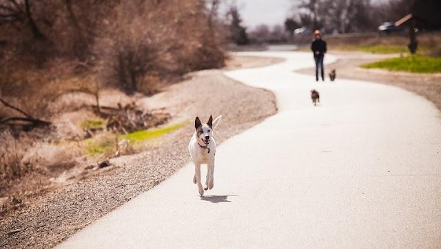 Marcher sans laisse