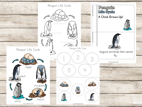 Penguin life cycle and penguin emergent reader
