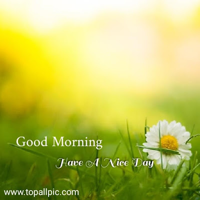 good morning pic hd images