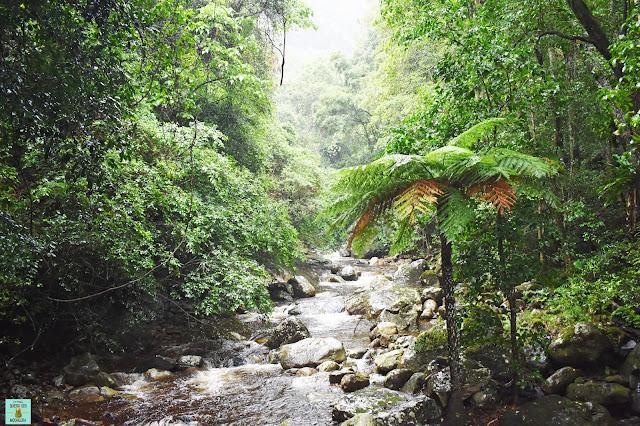 Minamurra Rainforest, Australia